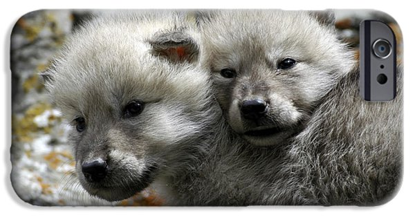 Recently Sold -  - Animals Photographs iPhone Cases - Wolves- Best Friends iPhone Case by Wildlife Fine Art