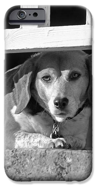 Beware - Guard Beagle on Duty in Black and White iPhone Case by Suzanne Gaff