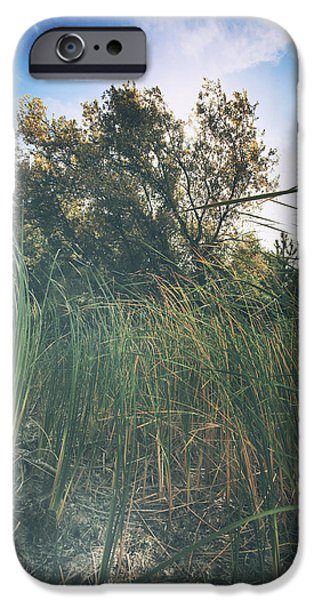 Cattails iPhone Cases - Beyond the Grass iPhone Case by Laurie Search