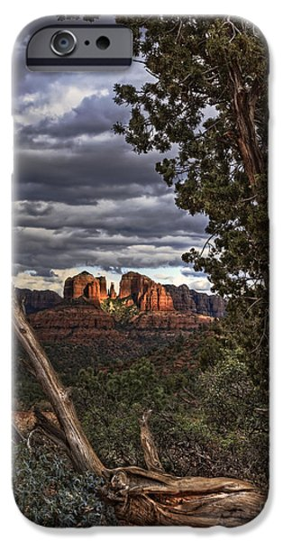 Cathedral Rock iPhone Cases - Beyond the Shaggy Bark Juniper iPhone Case by Medicine Tree Studios