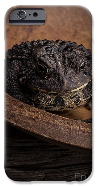 Wooden Bowl iPhone Cases - Big Black Toad iPhone Case by Edward Fielding