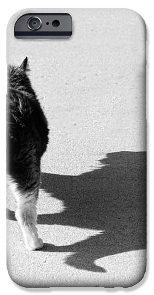 Big Cat Ferocious Shadow Monochrome iPhone Case by James BO  Insogna