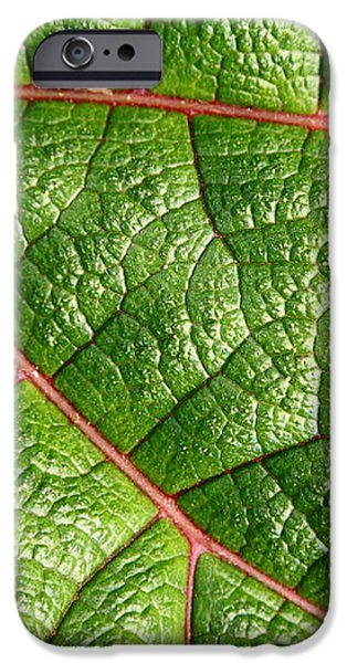 Big Green Leaf 5D22460 iPhone Case by Wingsdomain Art and Photography