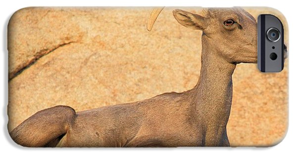 Barker iPhone Cases - Big Horn Blending In iPhone Case by Adam Jewell