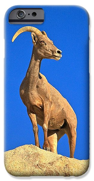 Barker iPhone Cases - Big Horn Pose iPhone Case by Adam Jewell
