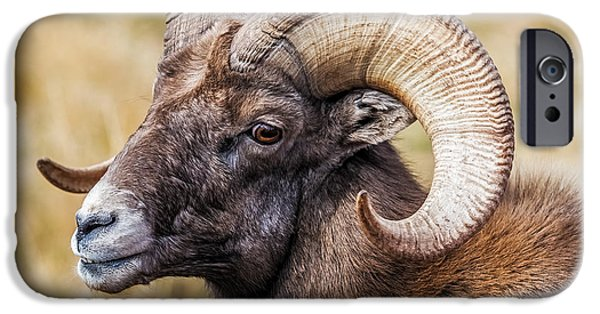 Inexpensive iPhone Cases - Big Horn Sheep iPhone Case by Paul Freidlund