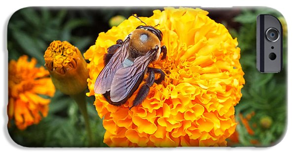 Insect Pyrography iPhone Cases - Big Orange iPhone Case by Hannah Underhill