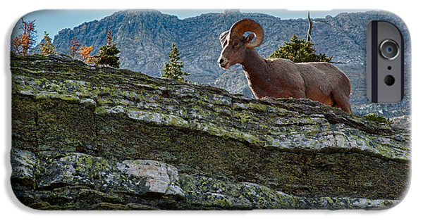Horn iPhone Cases - Bighorn iPhone Case by Sebastian Musial
