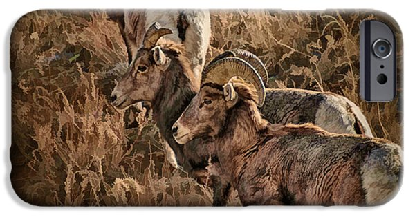 Arkansas iPhone Cases - Bighorn Sheep Digital Painting iPhone Case by Priscilla Burgers