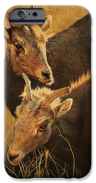 Arkansas iPhone Cases - Bighorn Sheep of the Arkansas River  iPhone Case by Priscilla Burgers