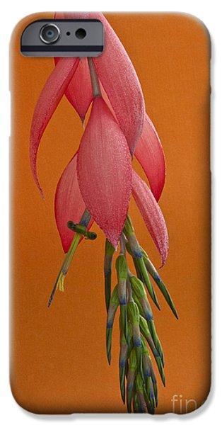 Bilbergia  Windii Blossom iPhone Case by Heiko Koehrer-Wagner