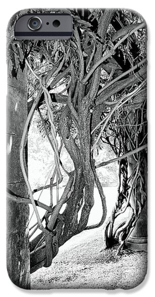 Asheville iPhone Cases - BILTMORE ARBOR Asheville NC iPhone Case by William Dey