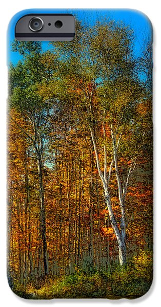 Surreal Landscape iPhone Cases - Birch among the Maples iPhone Case by David Patterson