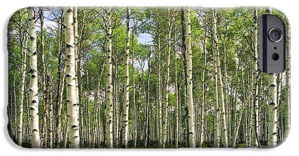 Interior Scene iPhone Cases - Birch Tree Grove in Summer iPhone Case by Randall Nyhof