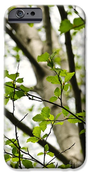 Forest Detail iPhone Cases - Birch tree in spring iPhone Case by Elena Elisseeva