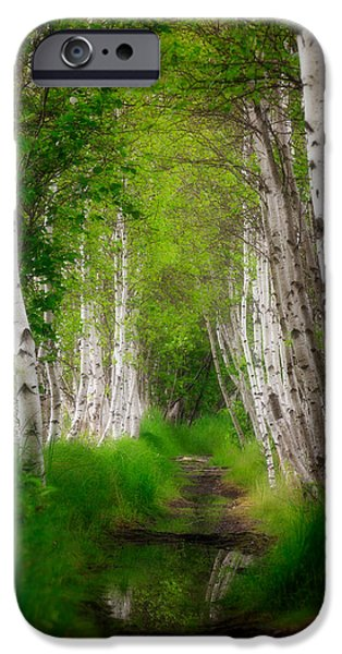 Field. Cloud iPhone Cases - Birch tree row iPhone Case by Emmanuel Panagiotakis