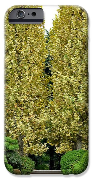 Shinjuku iPhone Cases - Birch Trees in Tokyo iPhone Case by Corinne Rhode