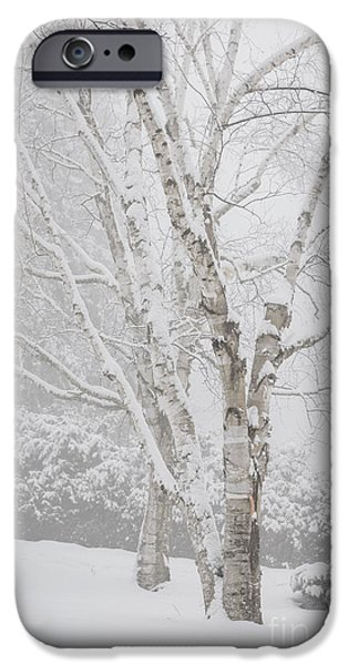 Birch Tree iPhone Cases - Birch trees in winter iPhone Case by Elena Elisseeva
