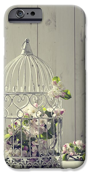 Bird Cage iPhone Cases - Bird Cage iPhone Case by Amanda And Christopher Elwell