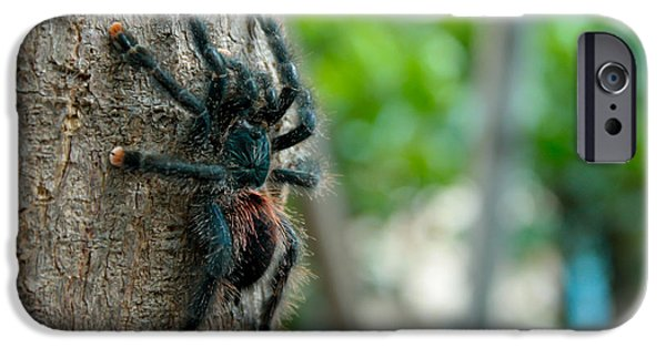 No People Pyrography iPhone Cases - Bird-eater Tarantula / Tarantula comedora de aves iPhone Case by Daniel Castillo
