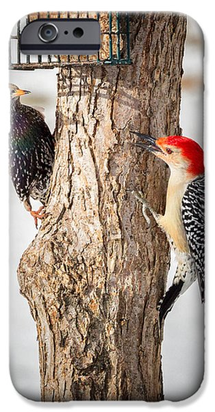 Woodpecker iPhone Cases - Bird Feeder Stand Off iPhone Case by Bill  Wakeley
