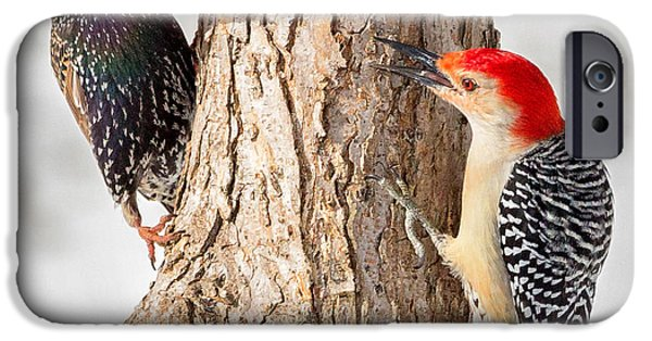 Woodpecker iPhone Cases - Bird Feeder Stand Off Square iPhone Case by Bill  Wakeley