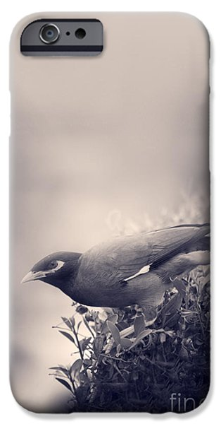 Escape Pyrography iPhone Cases - Bird iPhone Case by Jelena Jovanovic