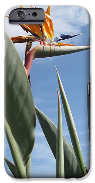 Plants Ceramics iPhone Cases - Bird of Paradise iPhone Case by Brenda Burns