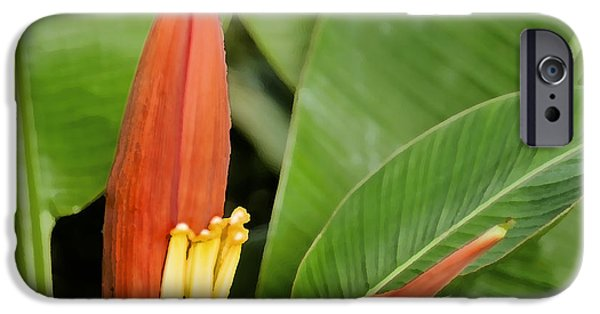 Yellow Bird Of Paradise iPhone Cases - Bird of Paradise DB iPhone Case by Rich Franco