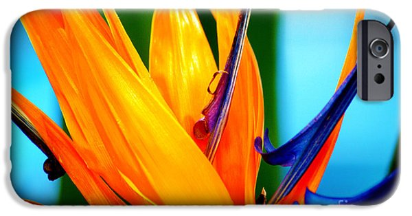 Yellow Bird Of Paradise iPhone Cases - Bird of Paradise Flower 3 iPhone Case by Susanne Van Hulst