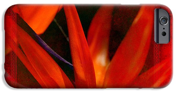 Yellow Bird Of Paradise iPhone Cases - Bird of Paradise Flower 5 iPhone Case by Susanne Van Hulst