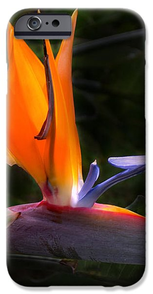Bird Of Paradise Flower iPhone Case by Brian Harig