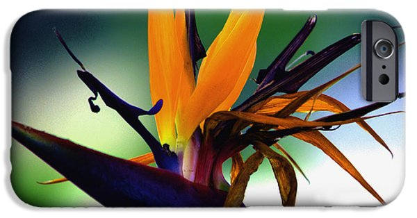 Yellow Bird Of Paradise iPhone Cases - Bird of Paradise Flower - Square iPhone Case by Susanne Van Hulst