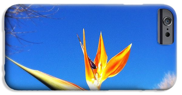 Yellow Bird Of Paradise iPhone Cases - Bird Of Paradise iPhone Case by Marco Oliveira