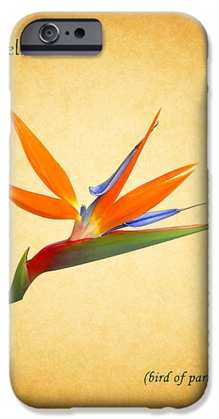 Flower Of Life iPhone Cases - Bird Of Paradise iPhone Case by Mark Rogan