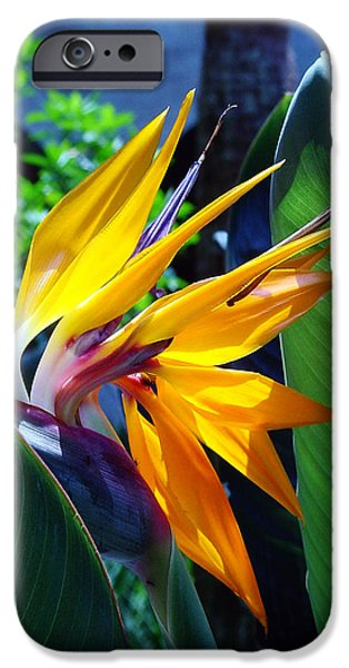 Florida Flowers Photographs iPhone Cases - Bird of Paradise iPhone Case by Susanne Van Hulst