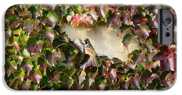 Berry Mixed Media iPhone Cases - Bird on wall of leafs iPhone Case by Toppart Sweden
