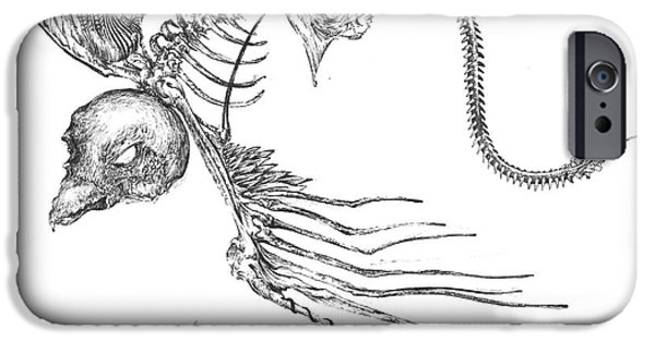 Skeleton Drawings iPhone Cases - Bird Ray iPhone Case by Penelope Fedor