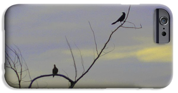 Birds On Limbs iPhone Cases - Bird Silhouette 2 iPhone Case by Cathy Lindsey