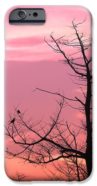 Birds On Limbs iPhone Cases - Bird Silhouette 11 iPhone Case by Cathy Lindsey