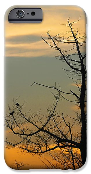 Birds On Limbs iPhone Cases - Bird Silhouette 9 iPhone Case by Cathy Lindsey
