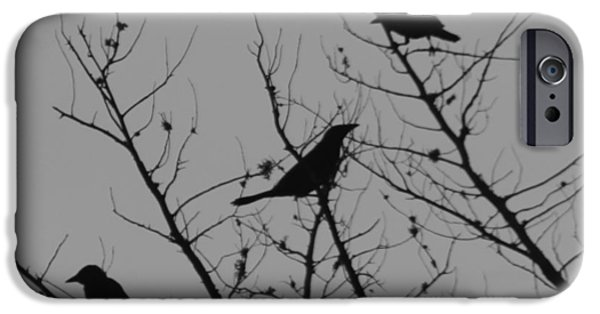 Birds On Limbs iPhone Cases - Bird Silhouette Black And White 2 iPhone Case by Cathy Lindsey