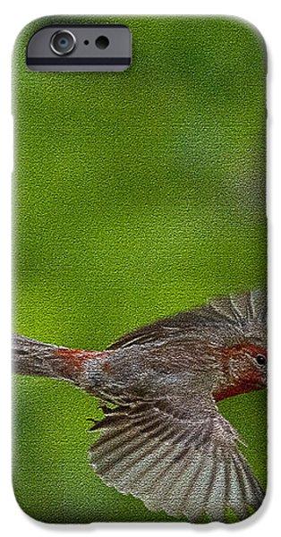 Bird soaring with food in beak iPhone Case by Dan Friend