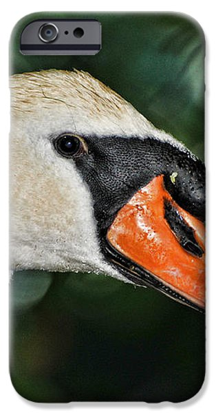 Bird - Swan - Mute Swan Close up iPhone Case by Paul Ward
