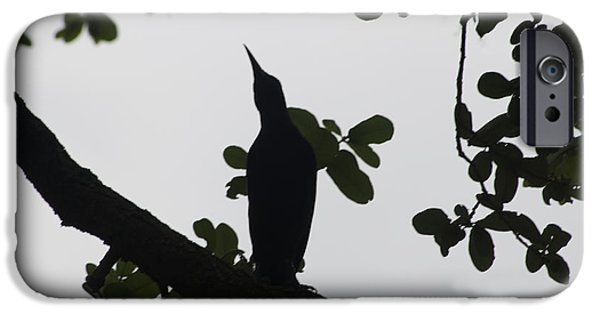 Creative Blackbird iPhone Cases - Bird - Grackle Twilight Moment - Luther Fine Art iPhone Case by Luther  Fine Art