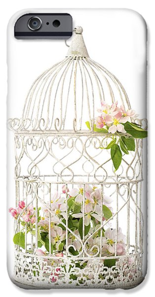 Bird Cage iPhone Cases - Birdcage of spring blossom iPhone Case by Amanda And Christopher Elwell