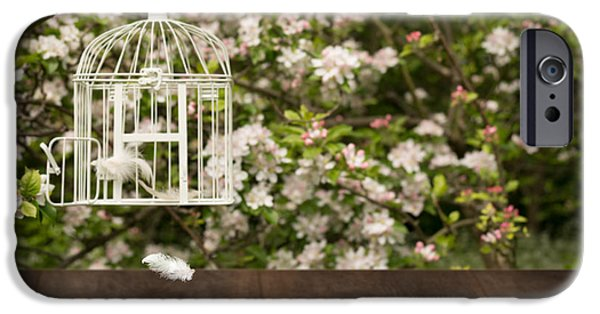 Old Plank Tables Photographs iPhone Cases - Birdcage With Feathers iPhone Case by Amanda And Christopher Elwell