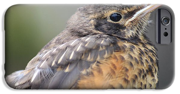Baby Bird iPhone Cases - Birdie iPhone Case by  The Art Of Marilyn Ridoutt-Greene