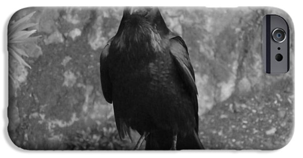 Crows Pyrography iPhone Cases - Birdman Of Alcatraz iPhone Case by Fabien White