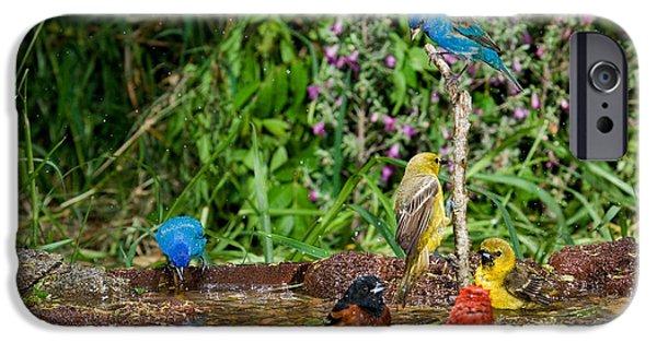 Oriole iPhone Cases - Birds Bathing iPhone Case by Anthony Mercieca